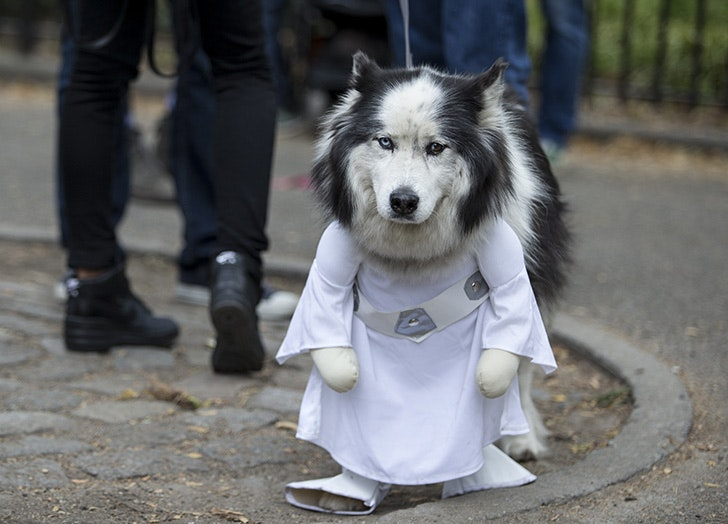 Princess Leia dog costume for Halloween & The 38 Best Halloween Costumes for Dogs in 2017 - PureWow