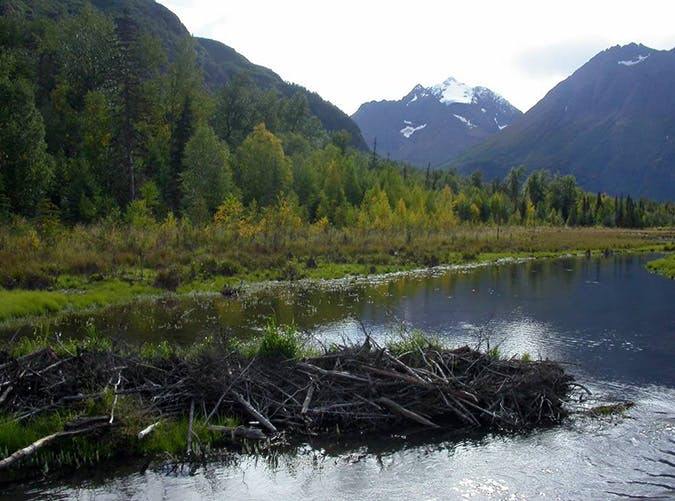 Rodak Nature Trail in Alaska