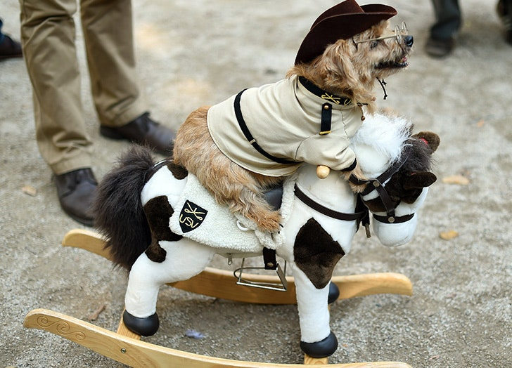 Teddy Roosevelt Halloween dog costume & The 38 Best Halloween Costumes for Dogs in 2017 - PureWow