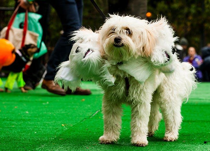 Three headed dog for Halloween