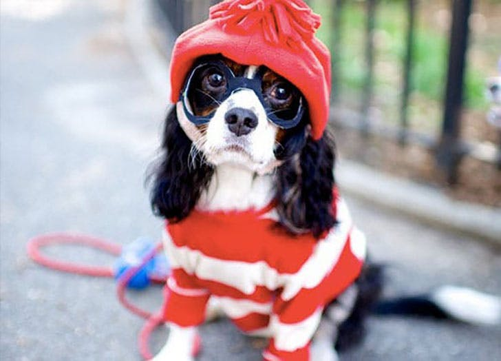 Where s Waldo  Halloween dog costume idea