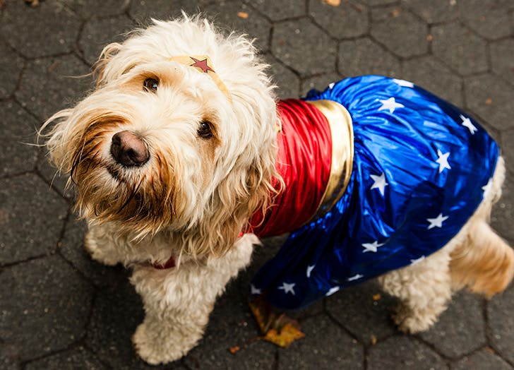Wonder Woman Halloween dog costume