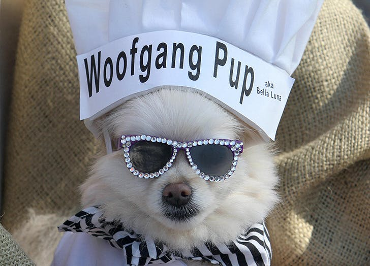 Woofgang Pup Halloween dog costume
