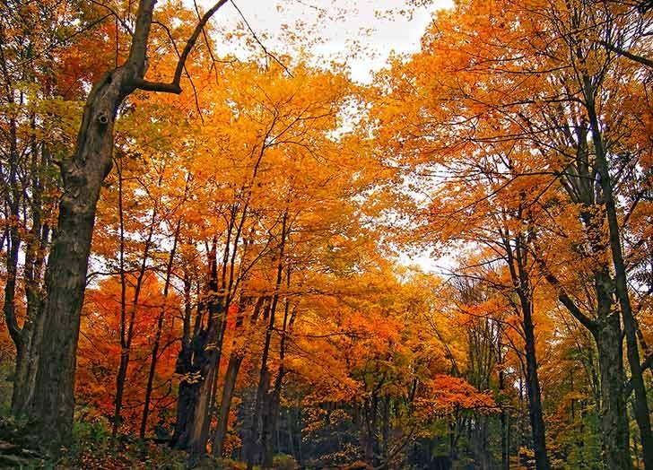 delaware water gap fall foliage NY