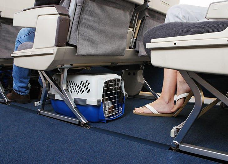 flight attendant 4