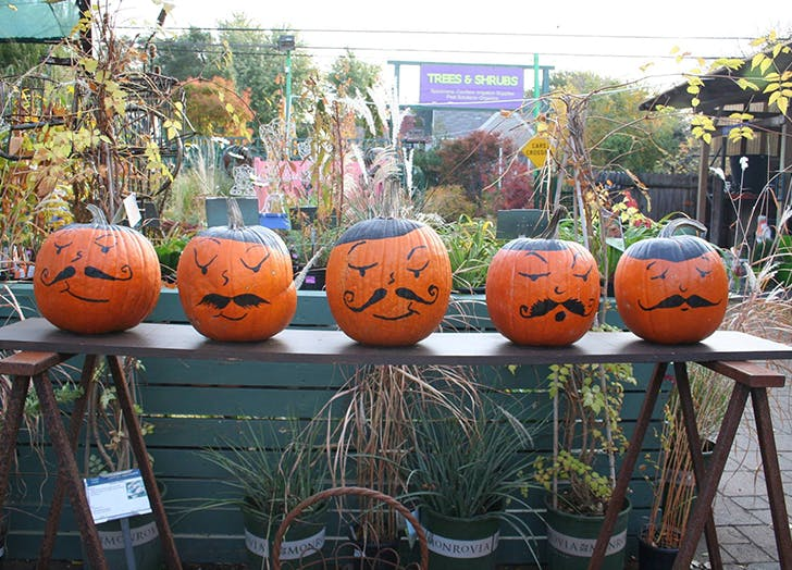 pumpkin garden center