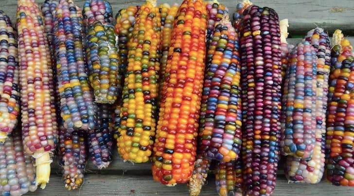 This Corn Is Officially the Prettiest Vegetable Weve Ever Seen