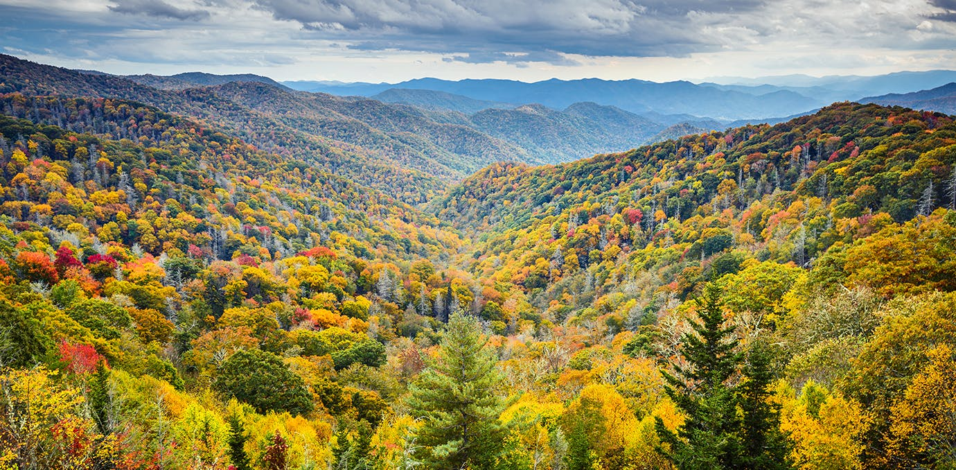 smoky mountains tennessee fall leaves travel
