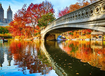 things to do in nyc fall cat