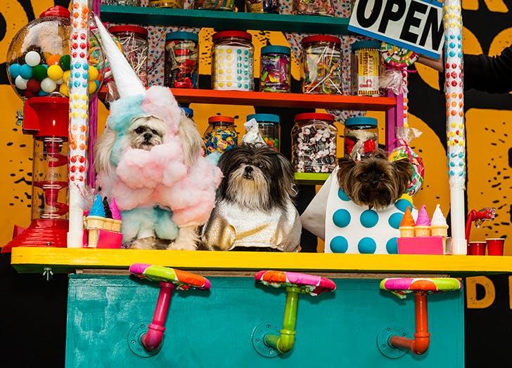 thompkins square halloween dog parade