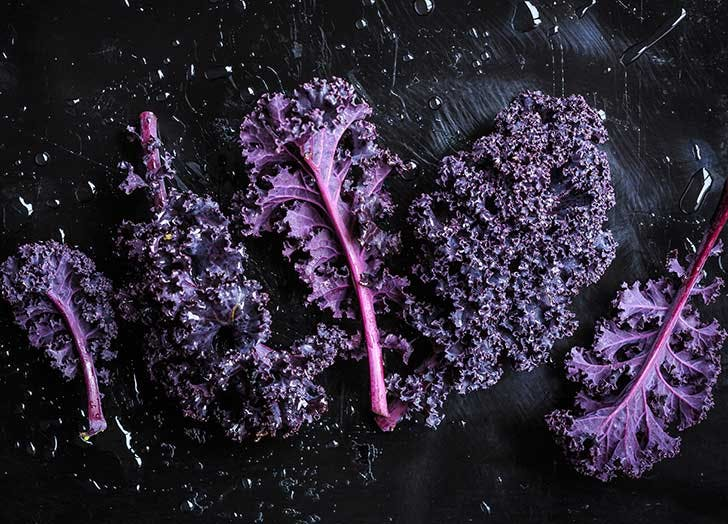 types of kale purple kale 524