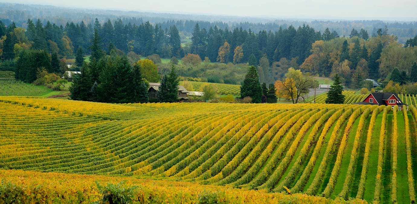 willamette valley oregon wine tasting travel
