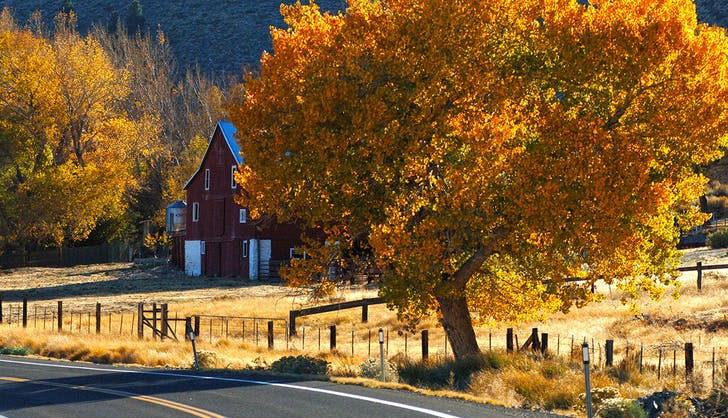 A red barn surrounded by fall colors and mountains in Genoa  Nevada