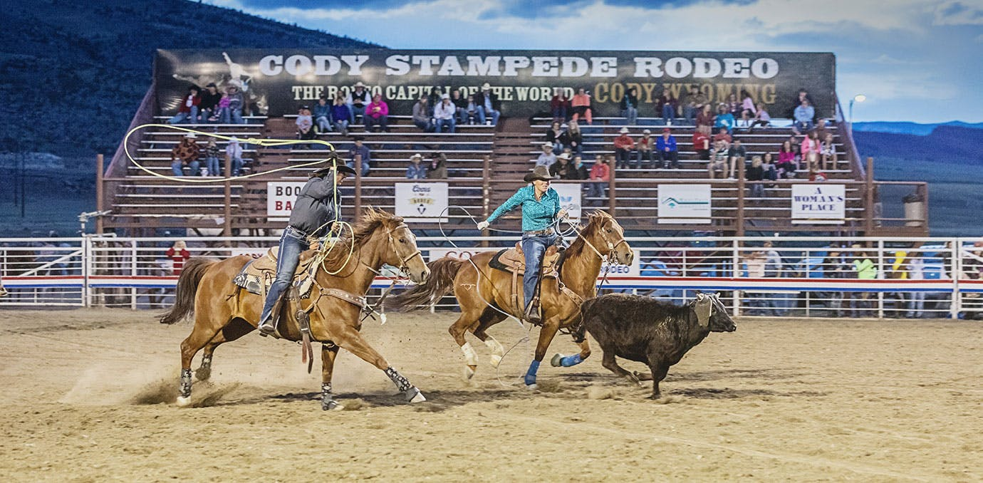 Bull chasing cowboys on horses at rodeo arena Cody Wyoming
