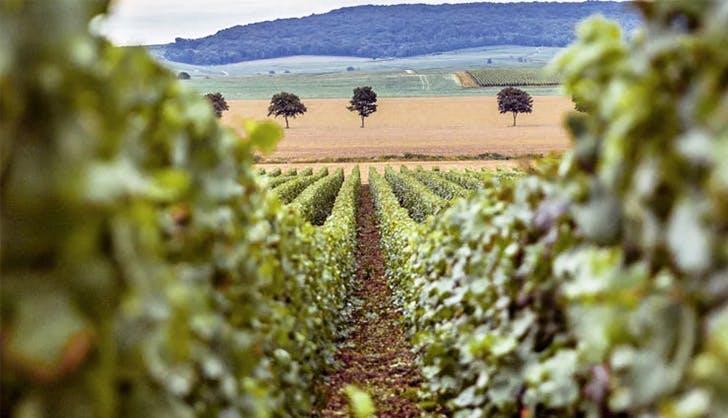 Champagne tasting trip in France