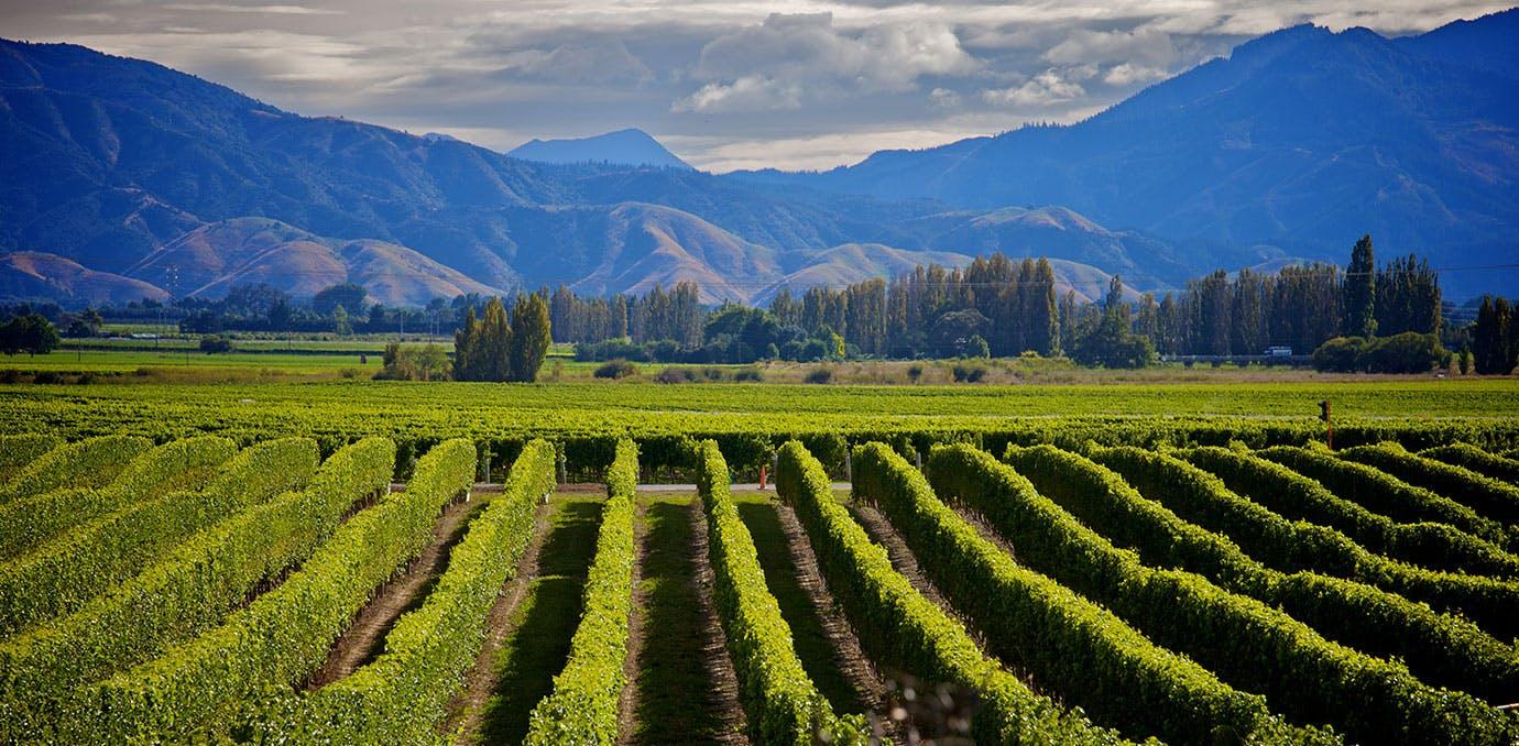 MARLBOROUGH  NEW ZEALAND WINE COUNTRY