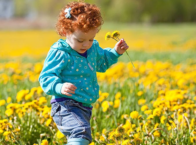 Red haired girl in a dandelions field