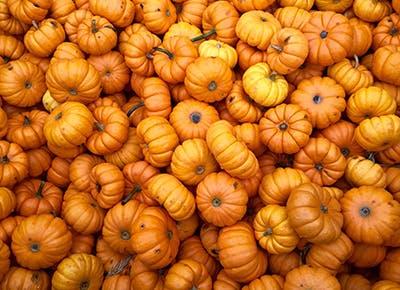aldi pumpkin products CAR