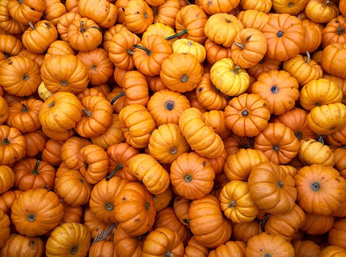 Every Pumpkin Item You Can Buy at Aldi This Fall