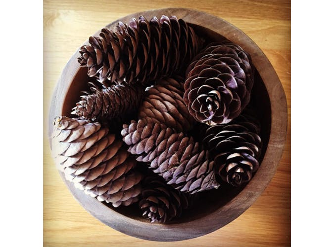 falldecor pinecone