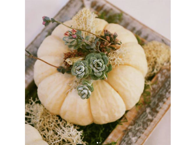 falldecor pumpplanter