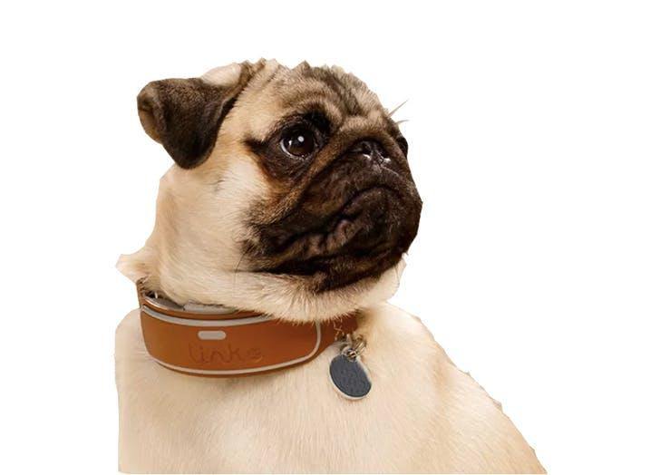 link collar1