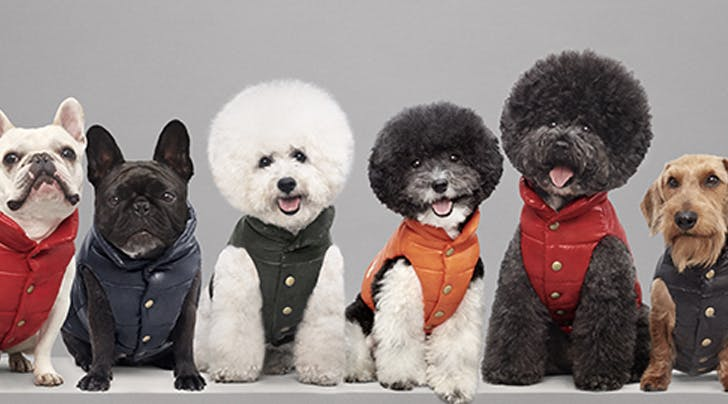 These $450 Dog Jackets Are Completely Sold Out and...What?