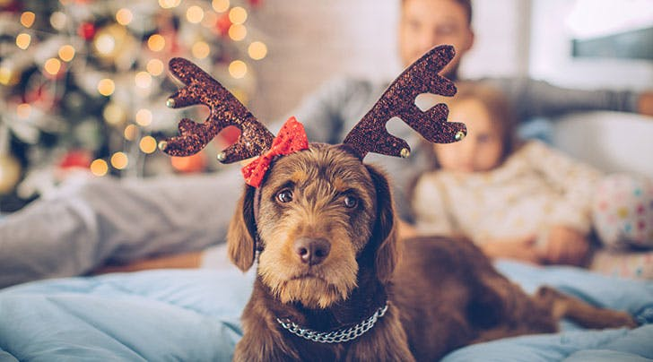 The One Treat You Shouldnt Give Your Dog This Christmas, According to the FDA