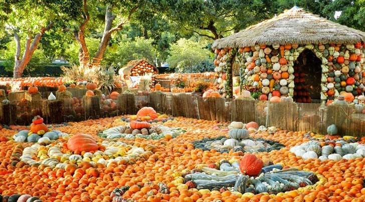 This Magical Pumpkin Village in Dallas Is Made from 90,000 Gourds