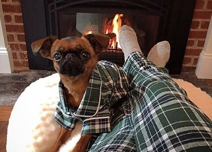 christmas trend dog pjs