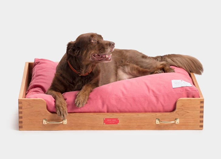 dog gift guide bed1