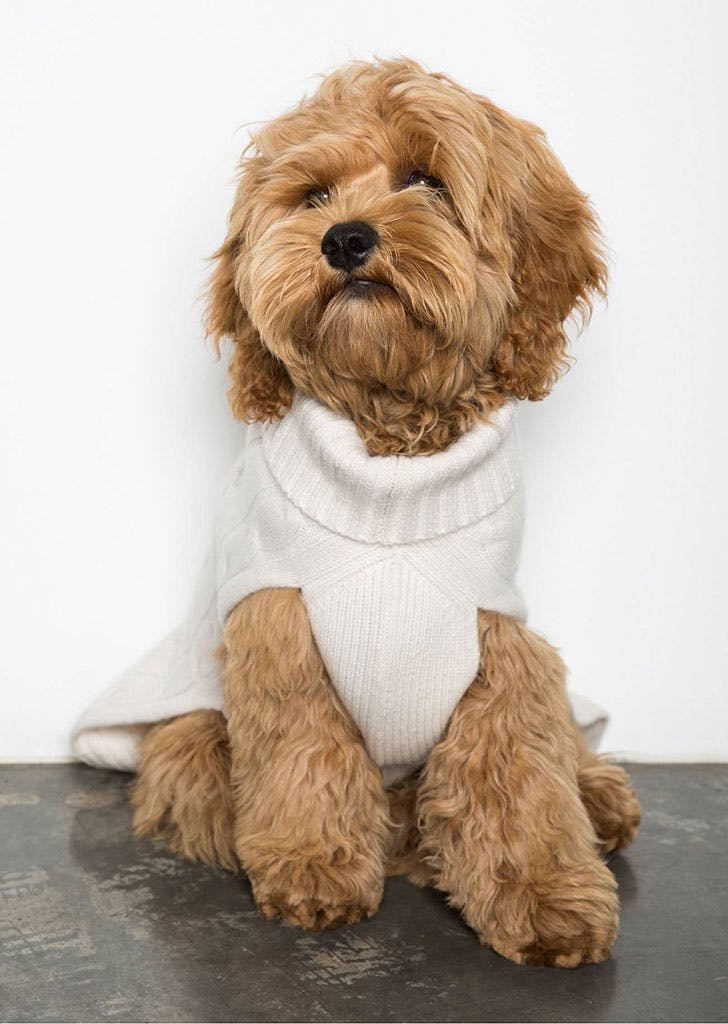 dog gift guide sweater1