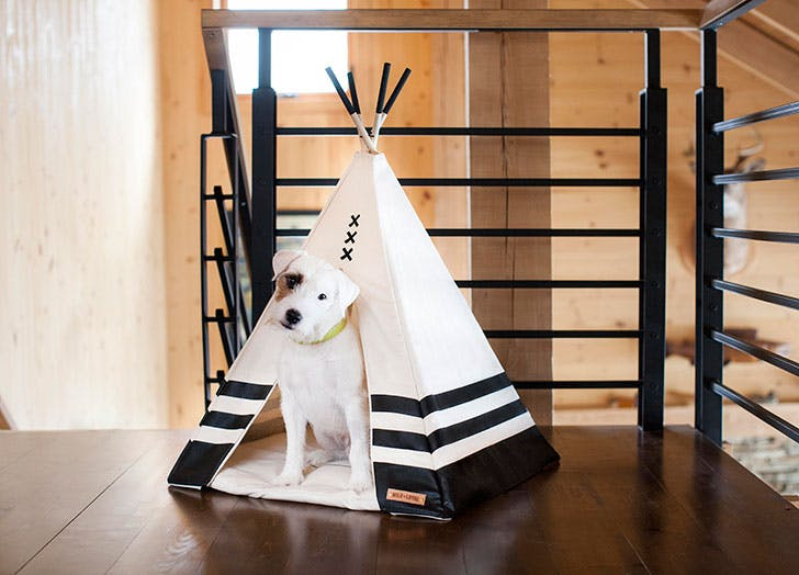 dog gift guide teepee