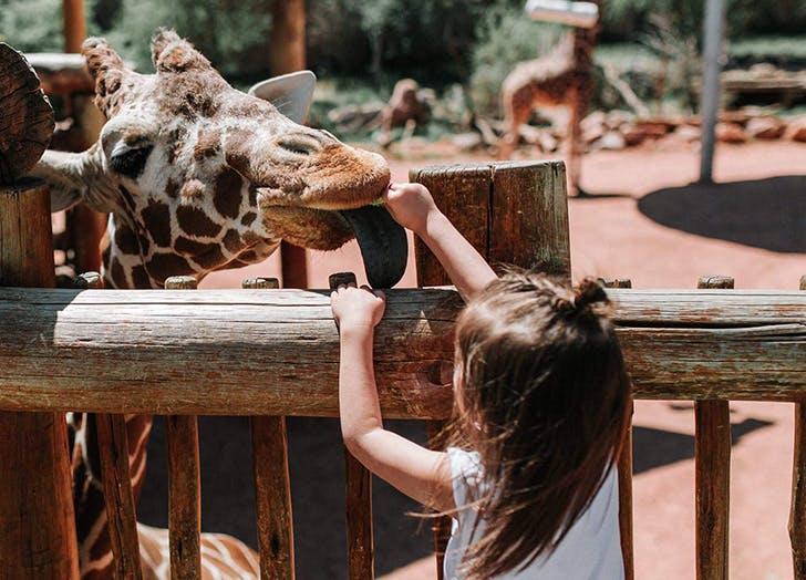 girl zoo giraffe