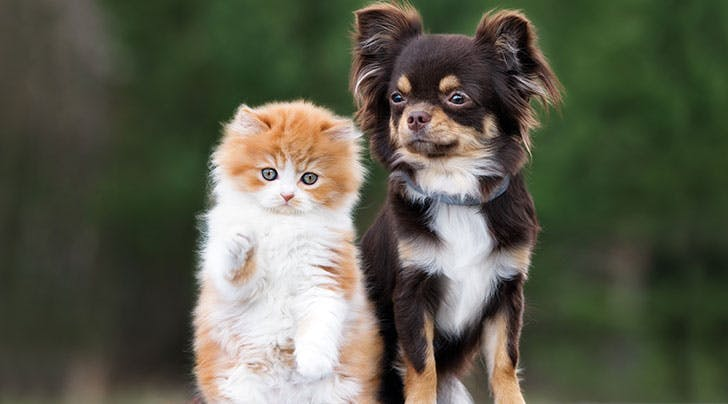 Who's Smarter, Cats or Dogs? Science Finally Has the Answer