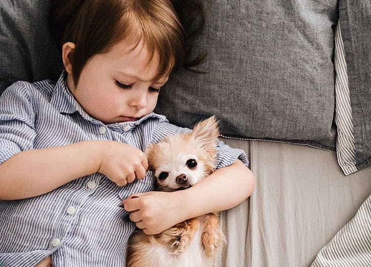 Cute kid playing with dog in bed