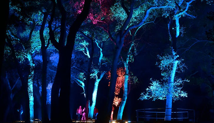 Descanso Gardens  Enchanted  Forest of Light los angeles winter events
