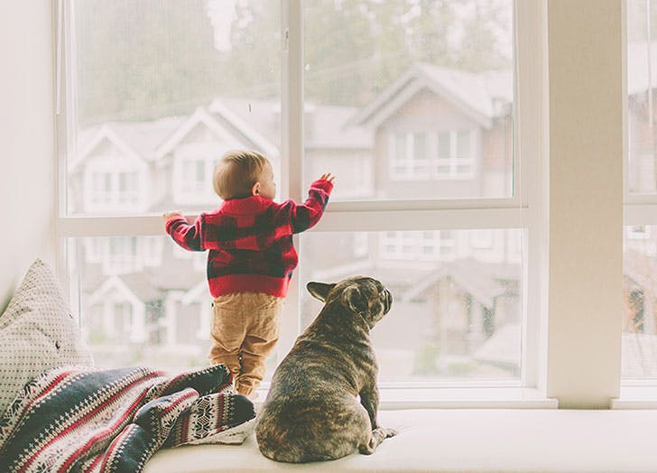 Dog and kid looking out window