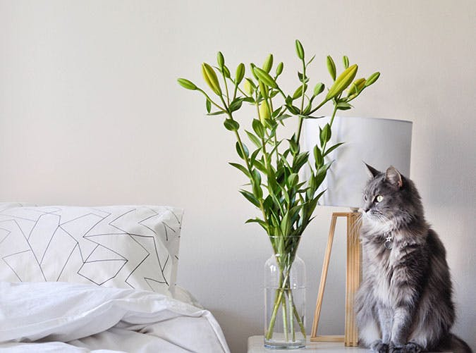 Vase with flowers and a cat in the bedroom