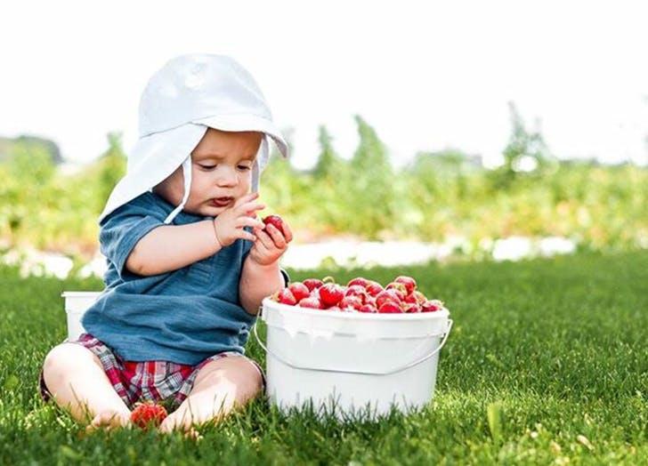 baby eating strawberries