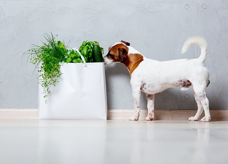 food dog names basil