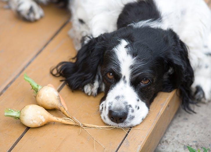 food dog names bokchoy