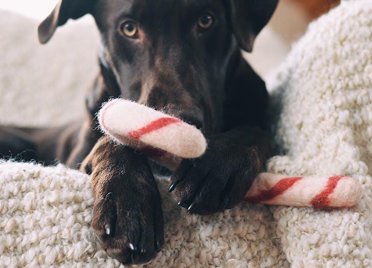 food dog names cocoa