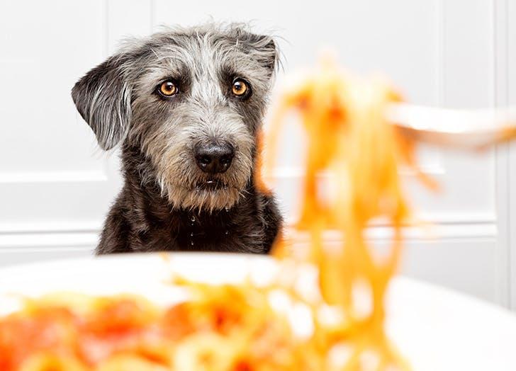 food dog names linguini