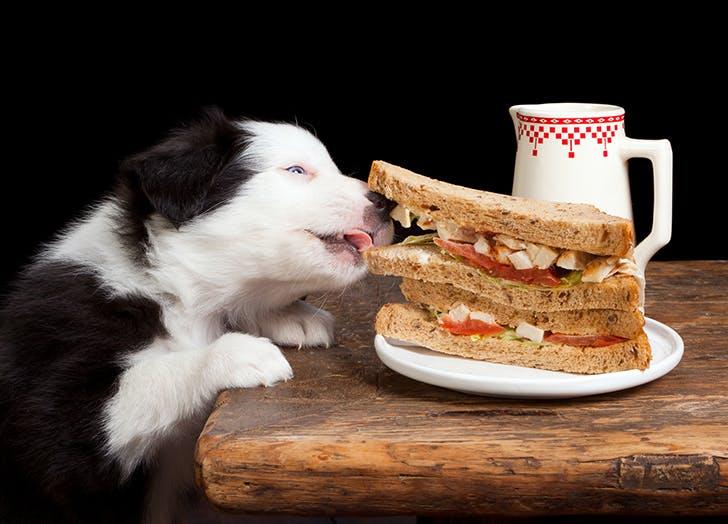 food dog names reuben
