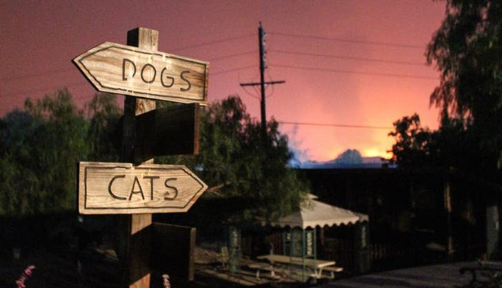 foster displaced animals how to help with the southern california wild fires