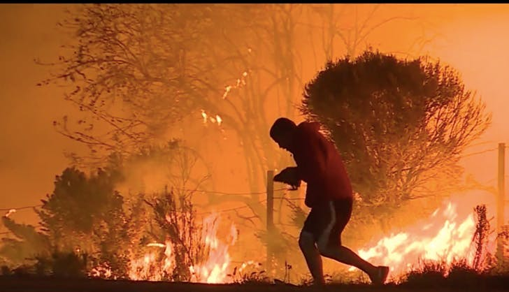 help wild life how to help with the southern california wild fires