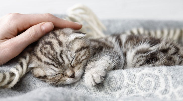 Dream Job Alert: You Can Now Get Paid to Cuddle Cats in Ireland