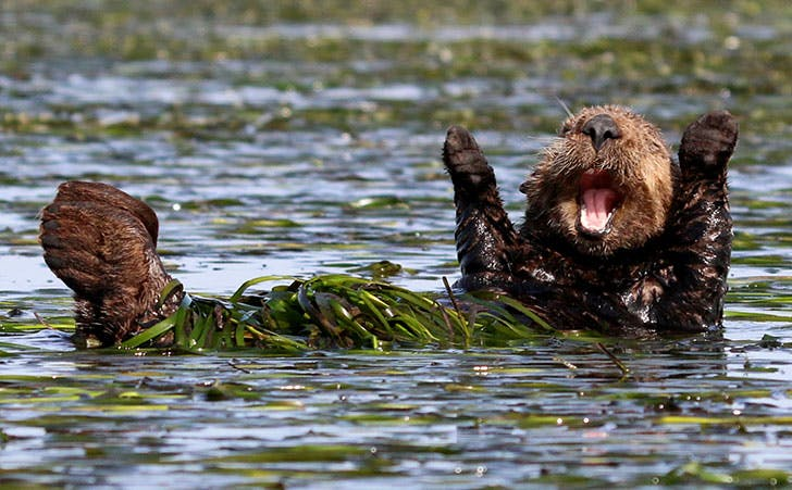 Penny PalmerBarcroft ImagesComedy Wildlife Photography Awards 2017