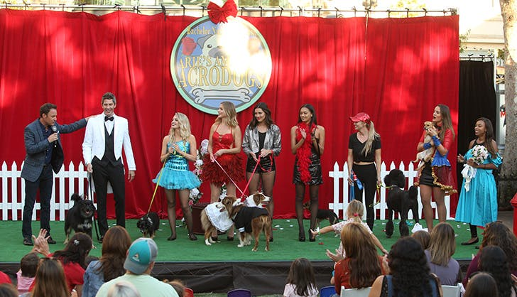 The Bachelor season 22 episode 3 recap dog show